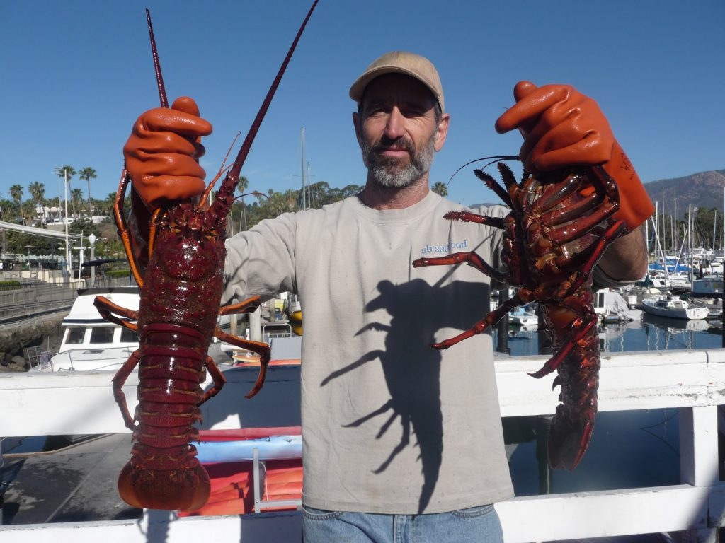 Shelling out for California lobster – For The Curious