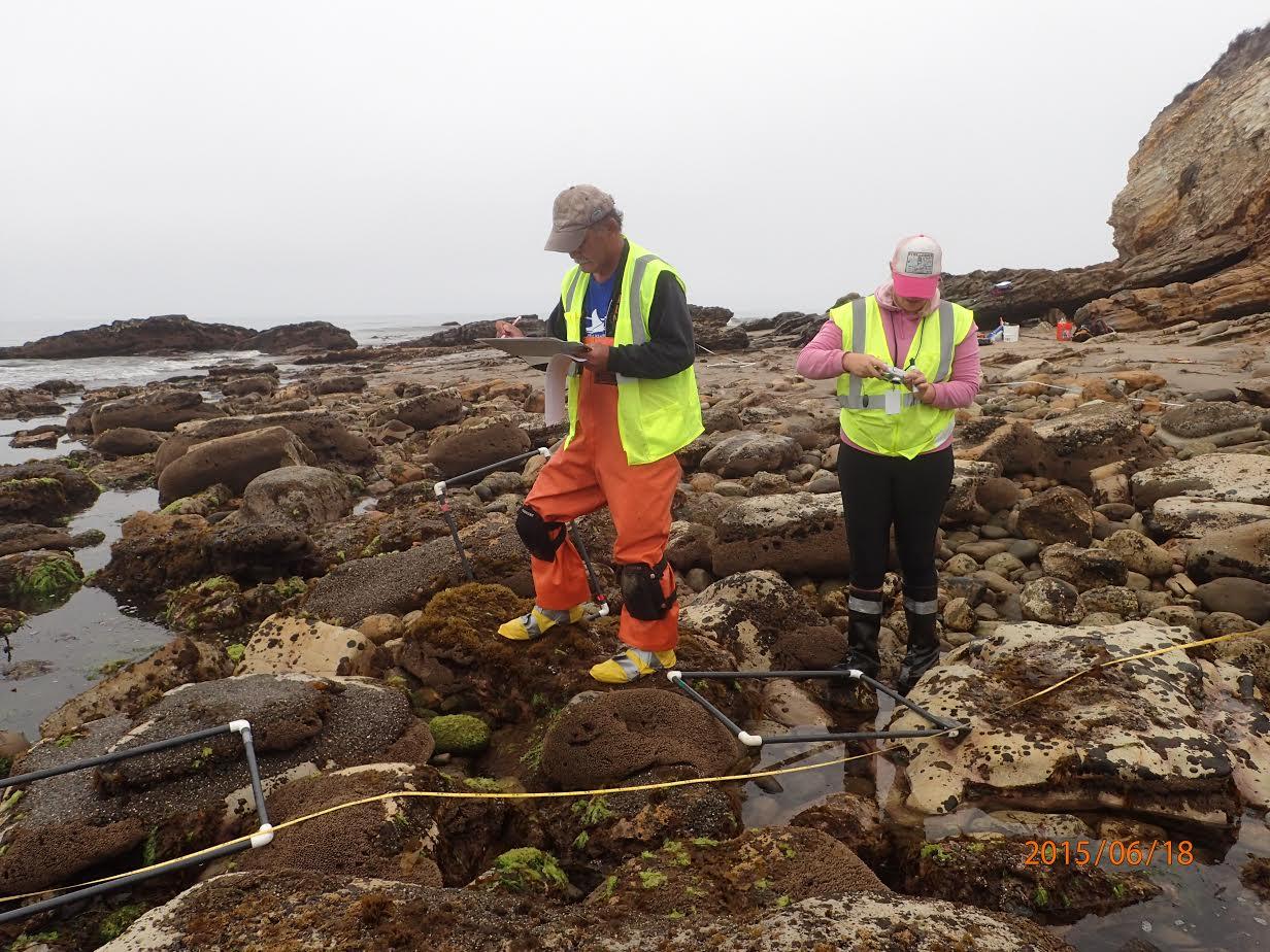 Rocky Intertidal USFWS (1)
