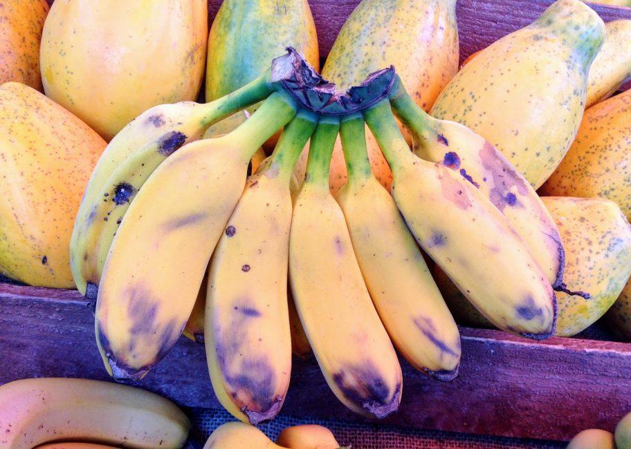 How tropical bananas are grown in Santa Barbara's Mesa