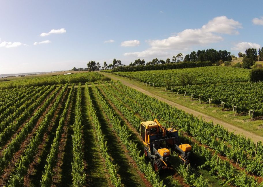 Central Coast vintners may choose machines over 'guest workers'